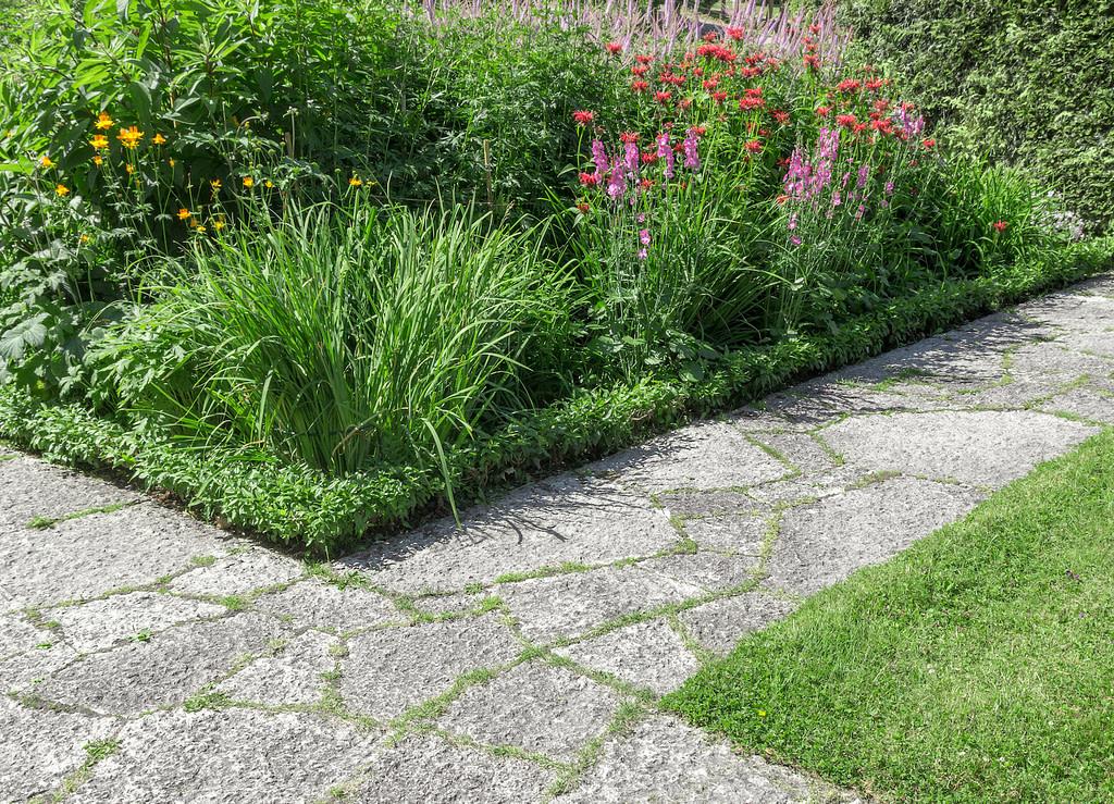 plants beside the cement walkway