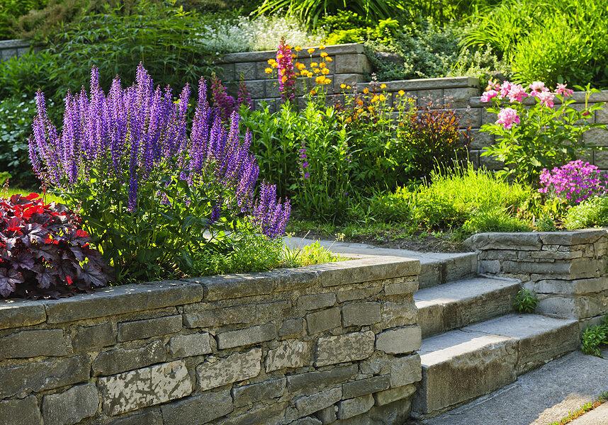 outdoor garden with plants
